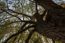 Baum im Gegenlicht von gilidhor