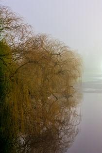 Bäume im Dunkeln von gilidhor