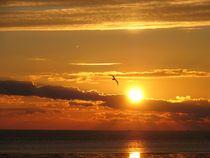 Sonnenuntergang mit Vogel von Asri  Ballandat - Knobbe