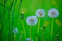 Blumenwiese16