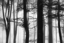 Im Zauberwald von Bruno Schmidiger