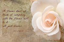 Zen Proverb 4 by Clare Bevan