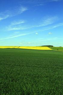 gelbe Insel von Jens Berger