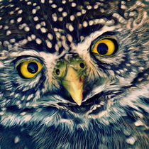 Owl by AD DESIGN Photo + PhotoArt
