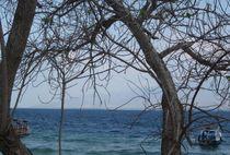 Hinter der Baum  by Asri  Ballandat - Knobbe