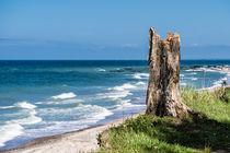 Baumstumpf an der Ostseeküste by Rico Ködder