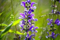 Blume von Helge Reinke