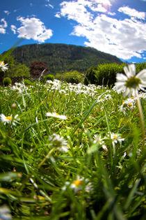 Blumenwiese by Helge Reinke
