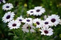 Blumen by Evienna Aigner