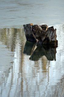 Baumstamm im See von Evienna Aigner