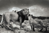 Lion family von Christine Sponchia