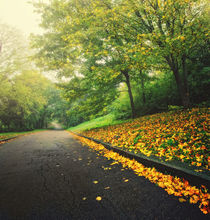 asphalt road with yellow autumn leaves by Maksym Tarasenko