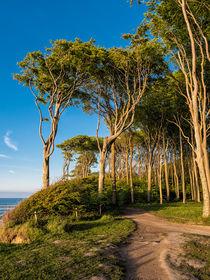 Küstenwald an der Ostseeküste von Rico Ködder