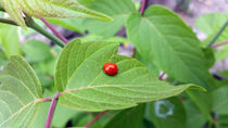 the lonely ladybug  von feiermar