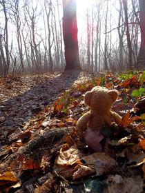 Im Sonnigen Wald von Olga Sander