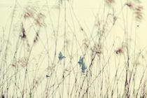 Vintage: Lake, Gras and Swan by Melanie Fischer