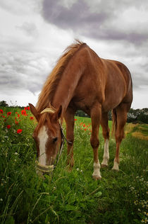 Skipy Quarterhorse von AD DESIGN Photo + PhotoArt