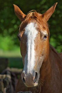 Quarterhorse by AD DESIGN Photo + PhotoArt