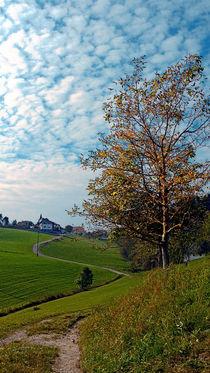 Bäume, Wolken, und genug Hügel von Patrick Jobst