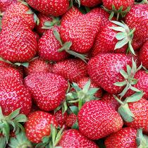 fresh strawberries 1 von feiermar