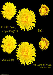 Dandelion Simplicity by Gena Weiser