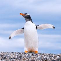 gentoo penguin von Konstantin Kalishko