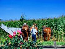 Amish Plowing von Gena Weiser
