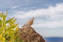 Die Taube über der See by Wilhelm Menze