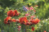Traumblüten - Blütentraum von Peggy Graßler