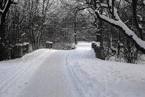 Winterliche Impressionen aus dem Palmengarten 5 von langefoto