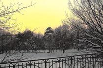 Winterliche Impressionen aus dem Palmengarten 6 von langefoto