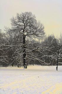 Winterliche Impressionen aus dem Palmengarten 7 by langefoto