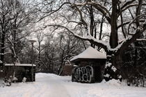 Winterliche Impressionen aus dem Palmengarten 8 von langefoto