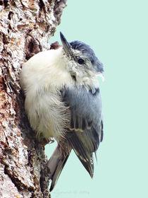 Stop Fluffing My Feathers von Gena Weiser
