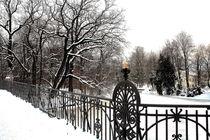 Winterliche Impressionen aus dem Palmengarten 9 von langefoto