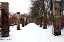 Winterliche Impressionen aus dem Palmengarten 12 von langefoto