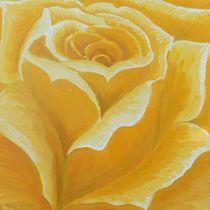 Gelbe Rose von Barbara Kaiser