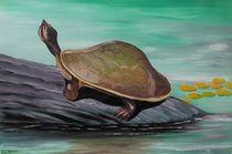 Schildkröte in Australien von Barbara Kaiser