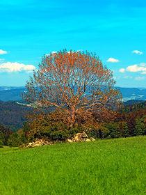 'Der einsame alte Baum in der Frühlingslandschaft' by Patrick Jobst