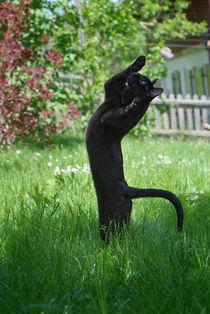 Yoga Cat von Heidi Bollich