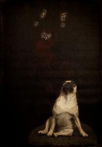 Lotti / 2 by Heidi Bollich