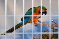 Parrot in a cage von lanjee chee