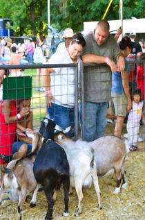 Goats At County Fair 1 by lanjee chee