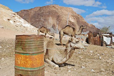 Sinai86