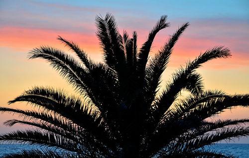 Palme-silhouette