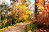 Autumn colors von Gaspar Avila