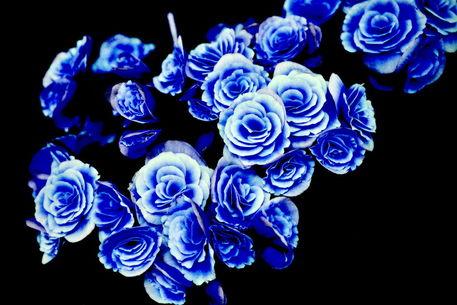 Bluete-2015-04