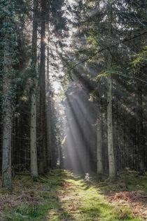 Woodland Sunrise von David Tinsley