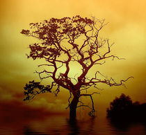 Evening Tree von Dave Harnetty