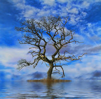 Tree on an Island von Dave Harnetty